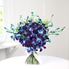 Beautiful 6 Blue Orchids