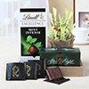 Lindt & After Eight Mint Chocolates With Good Luck Plant Hamper