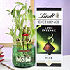 Lindt Chocolate with Personalized Bamboo Plant for Mom