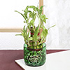 Mother's Day Bamboo Plant with Glass Plant Holder