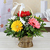 Round Handle Basket of 6 Exotic Mixed Gerberas