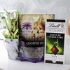 Siafa 260g Assorted Nuts & Lindt Citrus With Good Luck Plant