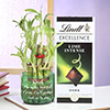 Special Dad Quote on Bamboo Plant with Lindt Chocolate