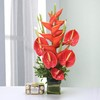 Vase of 5 Red Anthurium & 2 Big Bird with 16 Pcs Ferrero Rocher Box